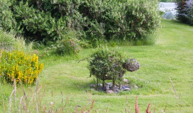 Neat sheep hedge near the nunnery (Source - Robert Brown)
